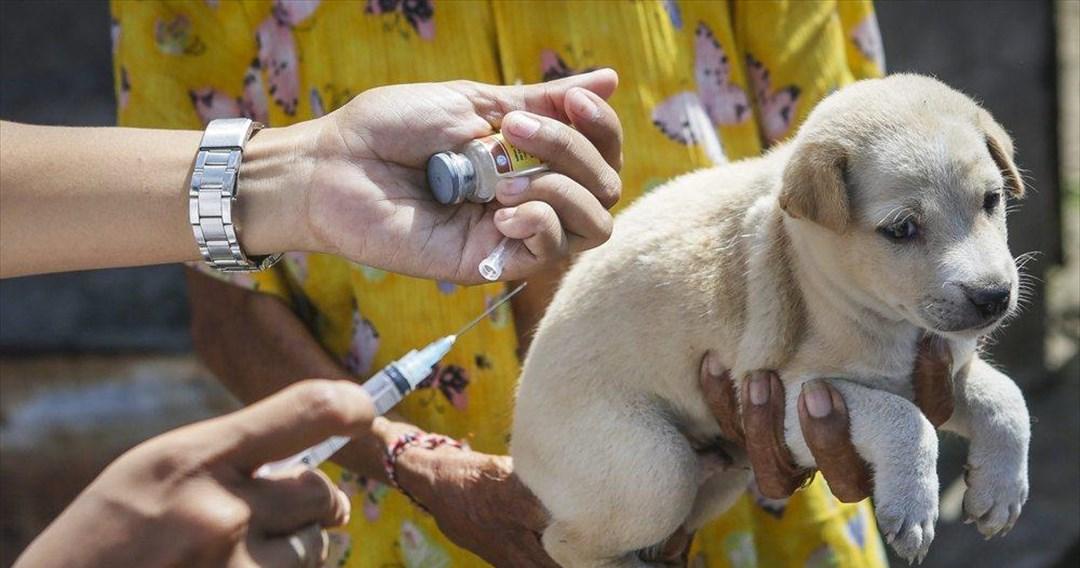 Η Ρωσία φτιάχνει εμβόλιο Covid για τα ζώα