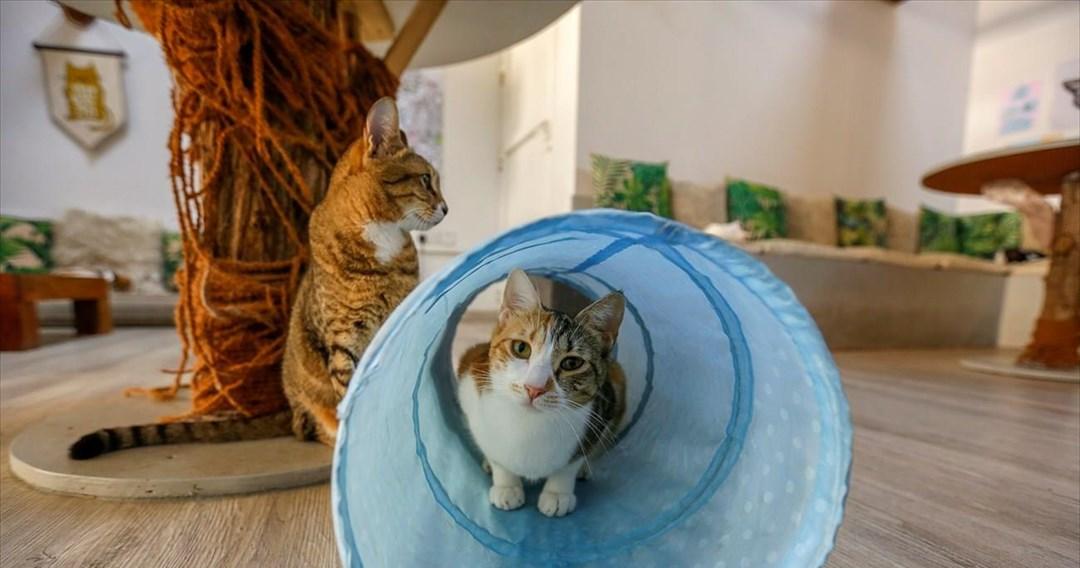 Το πρώτο ψυχολογικό προφίλ για τις ράτσες των γατών